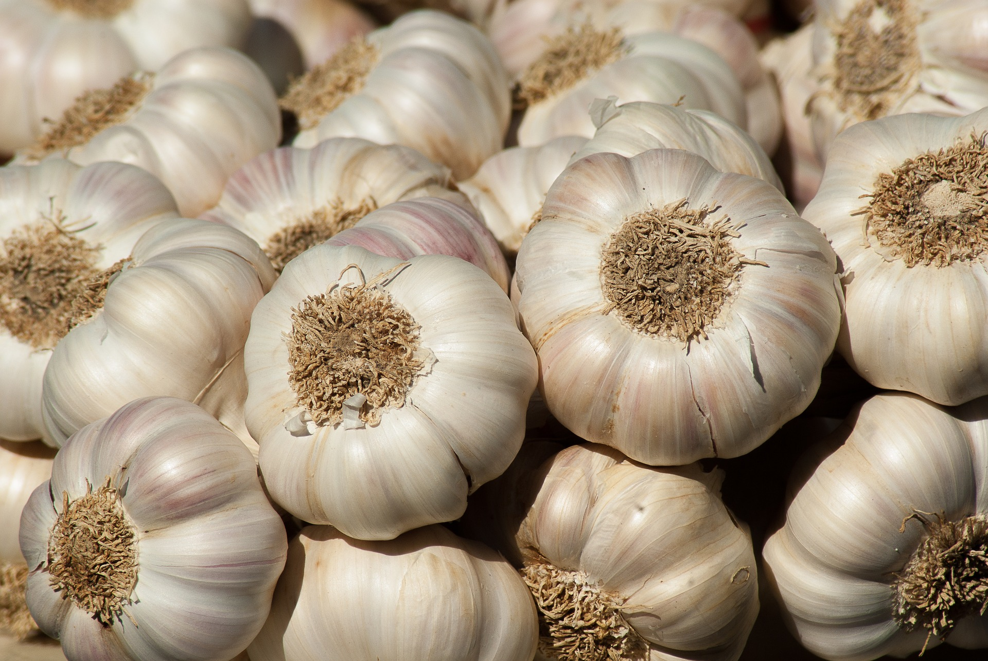 garlic-growing-guide.jpg