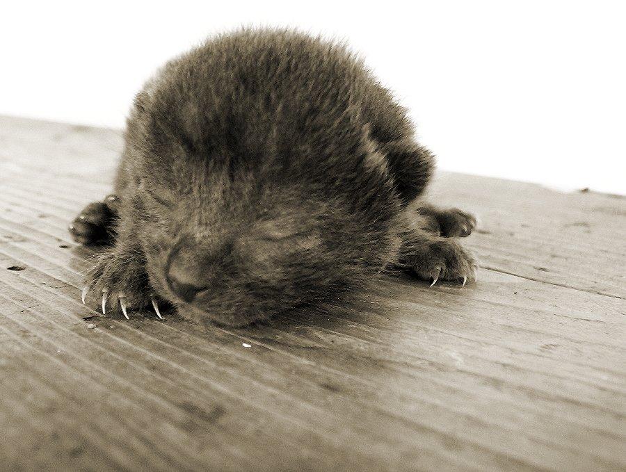 Капли от блох для кошек и котят: какие выбрать и как правильно использовать